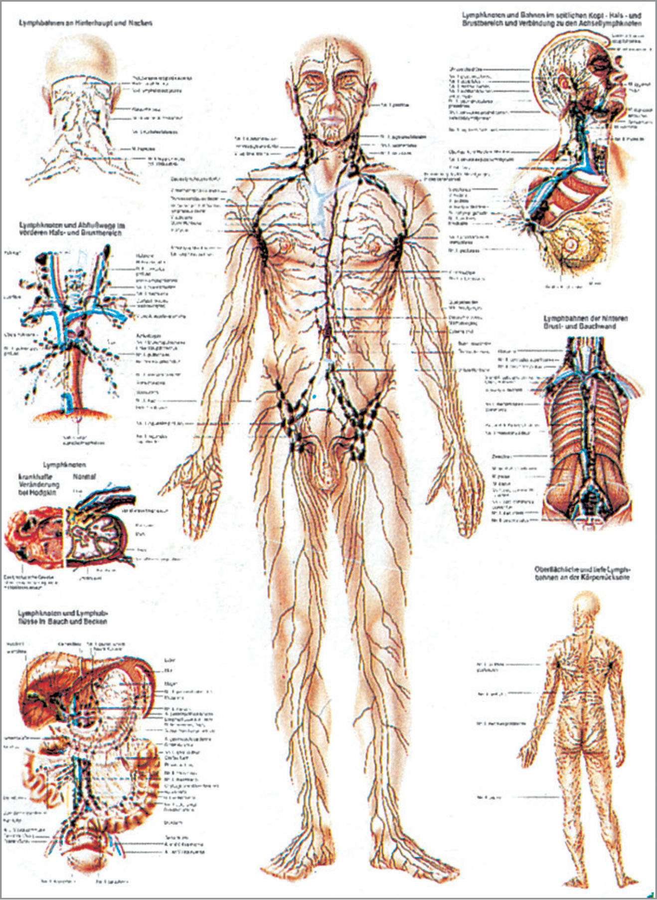 Tolle Kapitel 10 Muskelsystem Makroskopische Anatomie Fotos ...