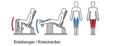 Kniebeuger-KniestreckerNEU