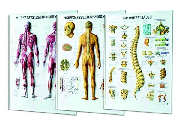 """Relieftafel """"Nervensystem des Menschen"""""""